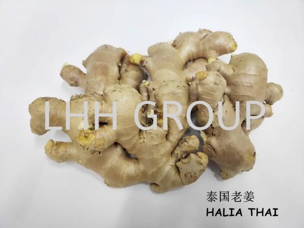 Halia Thai Vegetable Thailand Malaysia, Johor Bahru (JB), Singapore, Kulai Exporter, Supplier, Distributor, Importer | Lian Hoe Huat Enterprise (M) Sdn Bhd
