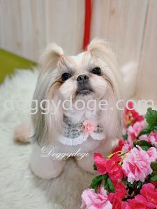 Shihtzu - Can Follow Me On This CNY Look!!!!!