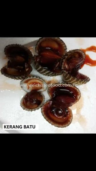 Kerang Batu Frozen Clam Selangor, Malaysia, Kuala Lumpur (KL), Klang Supplier, Suppliers, Supply, Supplies | Wei Chu Seafood Supply Trading Sdn Bhd