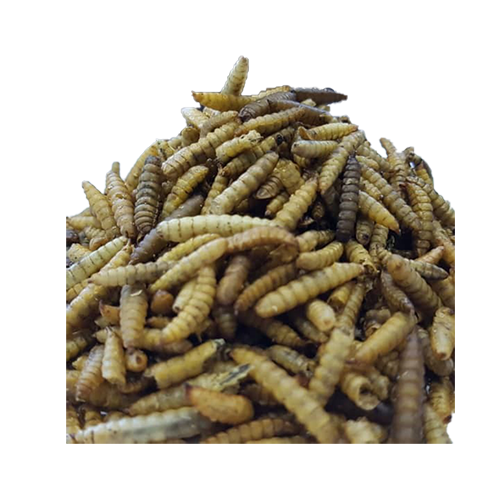 Microwave Dried Larvae Others Malaysia, Selangor, Kuala Lumpur (KL), Puchong Supplier, Suppliers, Supply, Supplies | Ori Biotechnology Sdn Bhd
