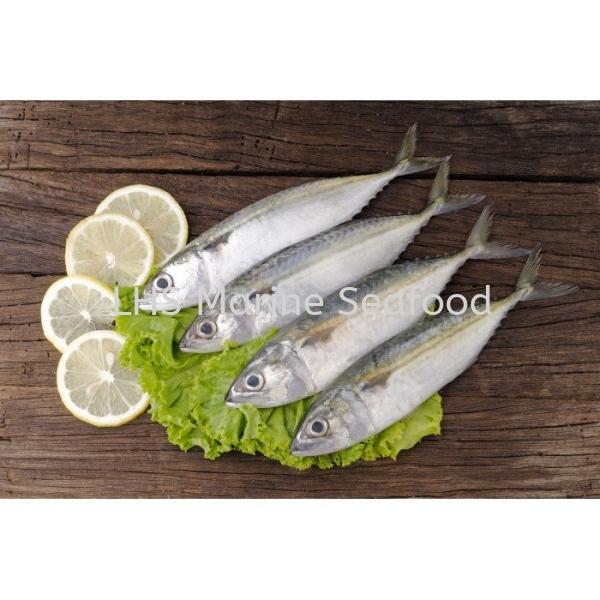 Fish Mackerel/Ikan Kembong Whole Fish Johor Bahru (JB), Malaysia, Skudai Supplier, Suppliers, Supply, Supplies | Lean Hup Shun Marine Seafood Sdn Bhd