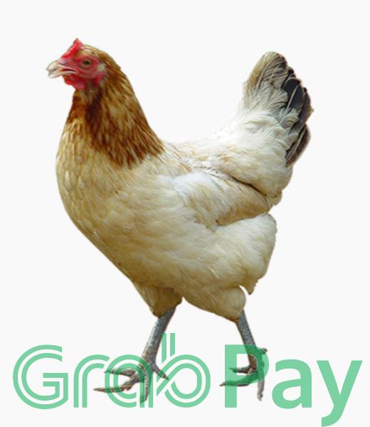 frozen chicken BERNICE DEMO  Malaysia Johor Selangor Penang Website, Organic SEO | NEWPAGES NETWORK SDN BHD - ABC123