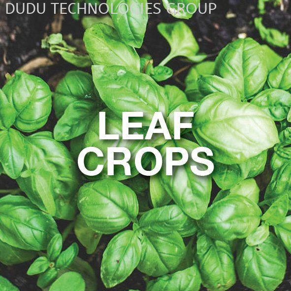 LEAF CROPS VEGETABLES Malaysia Mobile App | DUDU TECHNOLOGIES GROUP SDN BHD