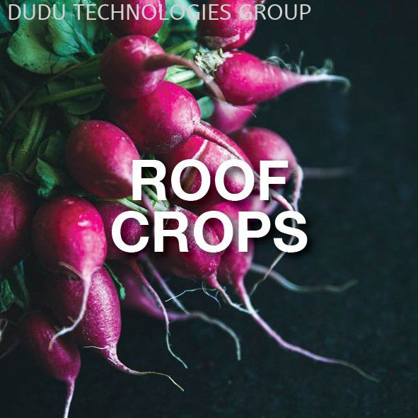 ROOF CROPS VEGETABLES Malaysia Mobile App | DUDU TECHNOLOGIES GROUP SDN BHD