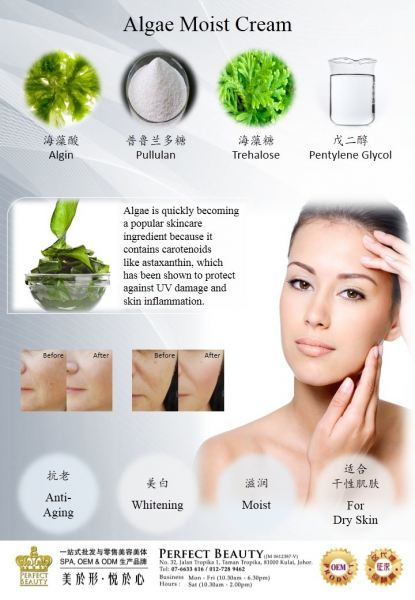 ALGAE MOIST CREAM OEM Kulai, Johor, Malaysia Supplier Supply Manufacturer | Perfect Beauty
