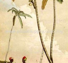 8 Unknown Facts about Palm Trees