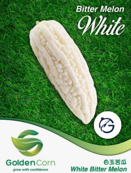 Bitter Melon White Others Vegetables Selangor, Malaysia, Kuala Lumpur (KL), Batu Caves Supplier, Suppliers, Supply, Supplies | G DAILY SUPPLY SDN BHD