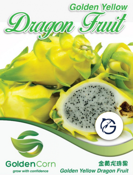 Golden Yellow Dragon Fruit Fruits Selangor, Malaysia, Kuala Lumpur (KL), Batu Caves Supplier, Suppliers, Supply, Supplies | G DAILY SUPPLY SDN BHD