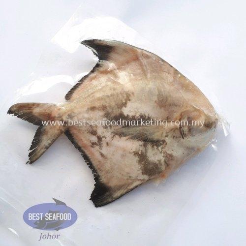 Chinese Pomfret / ¶·²ý / Bawal Tambak (Size 300g-350g)(sold per pcs) Fish / Óã Frozen / À䶳 Johor Bahru (JB), Skudai, Malaysia Wholesaler, Supplier, Supply, Retailer   BEST Seafood Marketing (Johor) Sdn Bhd