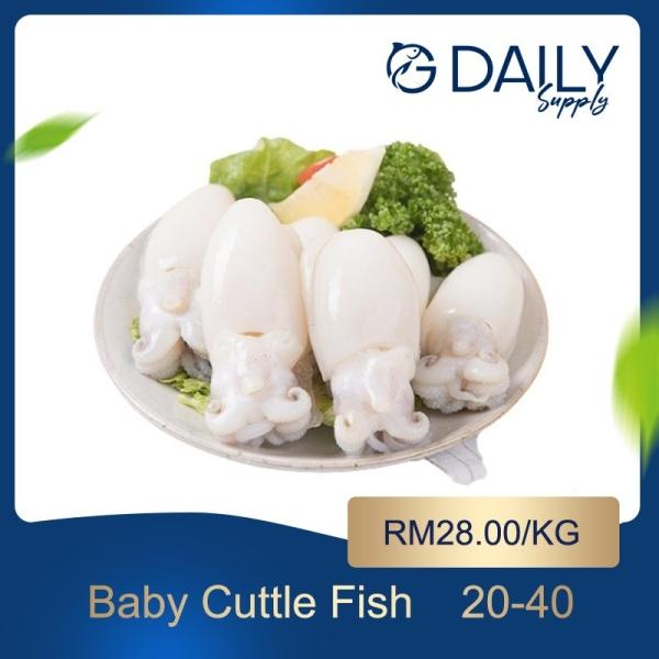 Baby Cuttle Fish  Scallop / Squid / Shell Seafood Selangor, Malaysia, Kuala Lumpur (KL), Batu Caves Supplier, Suppliers, Supply, Supplies   G DAILY SUPPLY SDN BHD