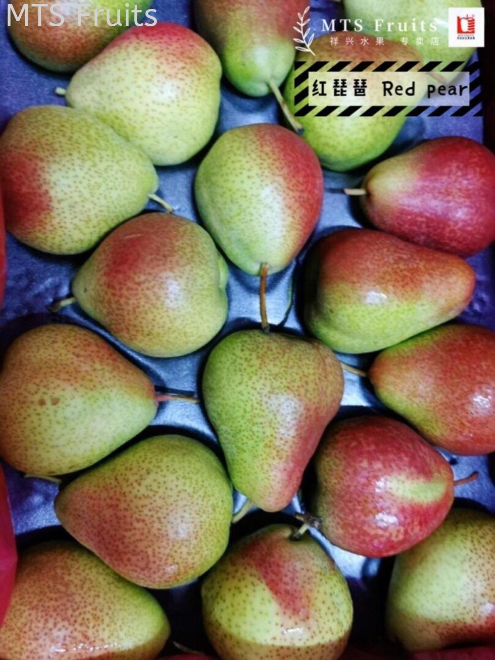 红琵琶 Red pear