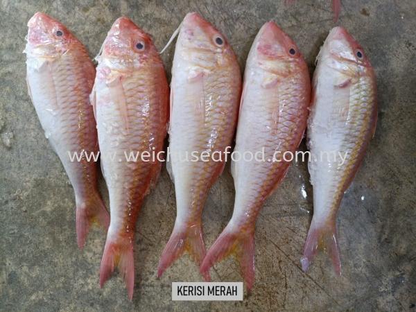 Ikan Kerisi Merah Fresh Fish Selangor, Malaysia, Kuala Lumpur (KL), Klang Supplier, Suppliers, Supply, Supplies | Wei Chu Seafood Supply Trading Sdn Bhd