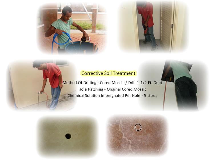 Subterranean Termite Control Program Johor Kulai Jb Malaysia Pest Control Services Terminate Control All Pest Management Services Sdn Bhd