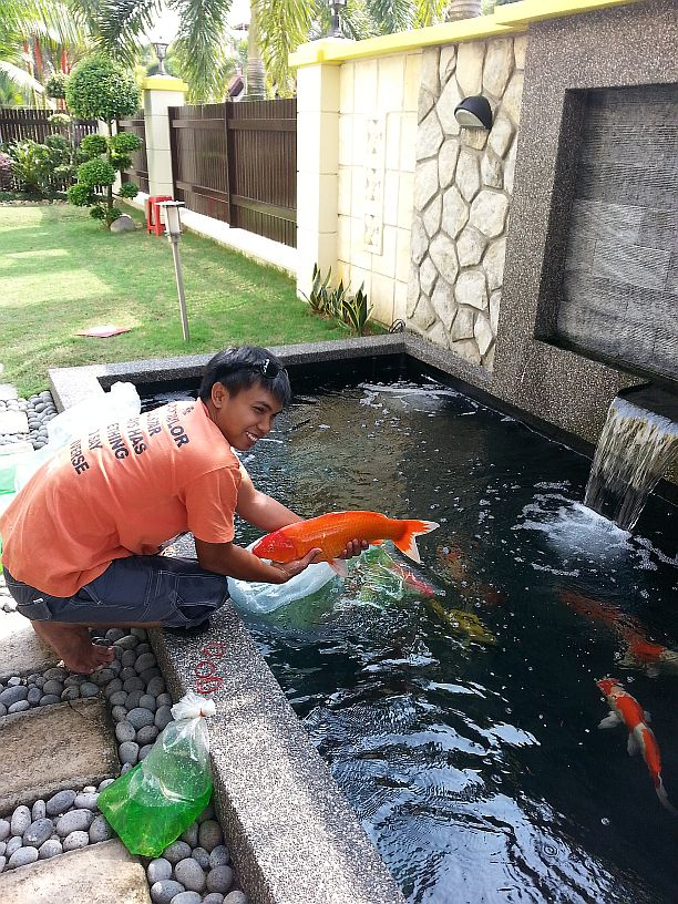 Fiber glassing koi pond johor bahru jb malaysia supply for Fish pond preparation