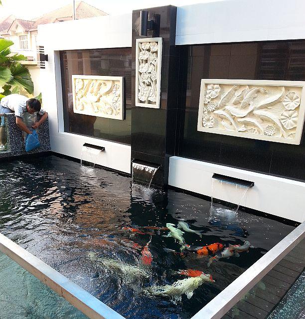 Kohaku koi house sdn bhd johor bahru jb malaysia for Koi pond design malaysia